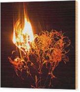 Flaming Seedheads Wood Print
