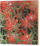 Flaming Zion Paintbrush Wildflowers Wood Print