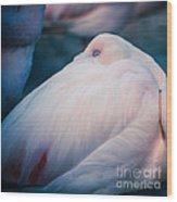 Flamingo 1b - Square Wood Print