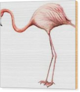 Flamingo Wood Print by Anonymous