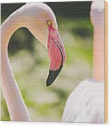 Flamingo Bird Portrait. Wood Print