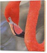 Flamingo Curves Wood Print