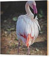 Flamingo In Fuchsia Wood Print