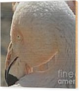 Flamingo Eye Wood Print