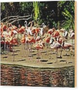 Flamingo Family Reunion Wood Print