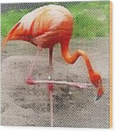 Flamingo Four Wood Print