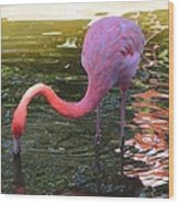 Flamingo Wood Print by Judy  Waller