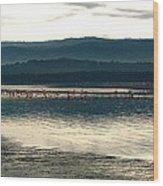 Flamingo Lake Wood Print