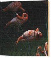 Flamingo Morning Wood Print