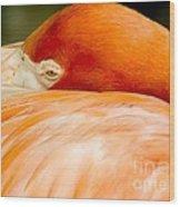 Flamingo Napping Wood Print
