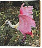 Roseate Spoonbil Wood Print