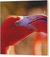 Flamingo-profile Wood Print by Angelika Sauer
