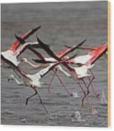 Flamingoes In Flight Wood Print