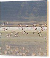 Flamingos Flying Over Water Wood Print