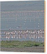 Flamingos On Lake Magadi Wood Print