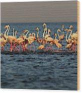 Flamingos On Lake Turkana Outside Elyse Wood Print