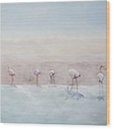 Flamingos Peru Wood Print