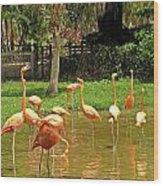 Flamingos Wading Wood Print