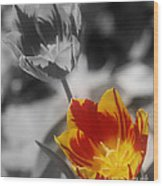 Flashy Tulips Wood Print