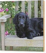 Flat-coated Retriever Puppy Wood Print