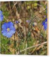 Flax Flower At The Chambers Island Lighthouse  Wood Print