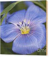 Flax Flower Wood Print