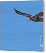 Fledgling Bald Eagle 5076 Wood Print