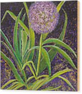 Fleur D Allium With Iris Leaves Backup Wood Print
