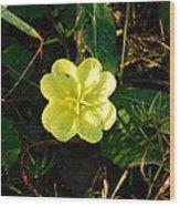 Fleur Jaune Couverte De Rosee Wood Print