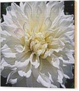 Fleurel Dahlia Wood Print