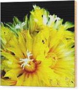 Fleurs De Cactus 2 Wood Print