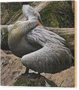 Pelican Grace Wood Print