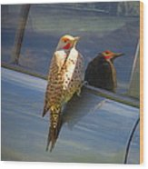Yellow Shafted Northern Flicker Hanging Around Wood Print
