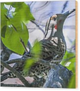 Flicker In The Lilacs Wood Print