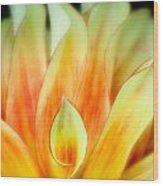 Flickering Petals Wood Print