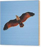 Flight Of Eagle Wood Print