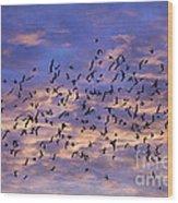 Flight Of The Blackbirds Wood Print