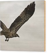 Flight Of The Brown Kite V7 Wood Print