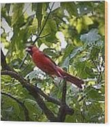 Flight Of The Cardinal Wood Print