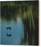 Flight Of The Cormorant Wood Print