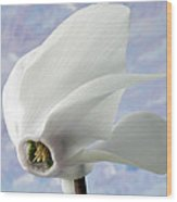 Flight Of The Cyclamen. Wood Print