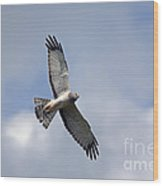Flight Of The Harrier Wood Print