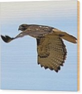 Flight Of The Hawk Wood Print