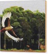 Flight Of The Jabiru V2 Wood Print