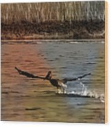 Flight Of The Pelican-featured In Wildlife-newbies And Comfortable Art Groups Wood Print