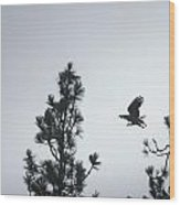Flight Of The Raptor Wood Print