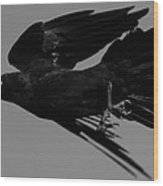 Flight Of The Raven Wood Print