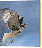 Flight Of The Red Tail Wood Print