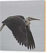 Flight Of The White Necked Heron Wood Print