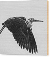 Flight Of The White Necked Heron V2 Wood Print